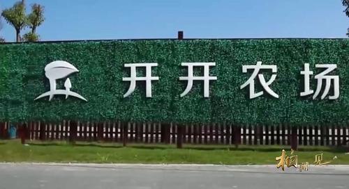 """柏聞一見第22期:開開農場用戶吃新鮮蔬菜玩""""偷菜""""遊戲"""