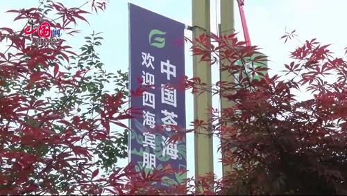"""""""富尊和美""""亮相第11届贵州茶博会"""