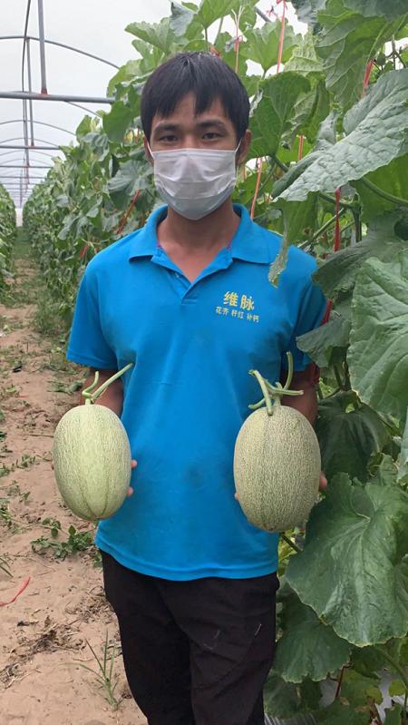 百果園暖春助農再行動,幫助海南蜜瓜打開新銷路